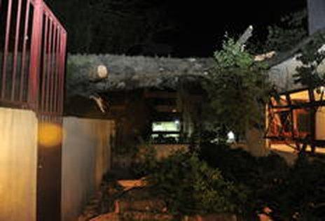Paineira ficava em um terreno onde é construído condomínio (Agencia RBS/Tadeu Vilani)