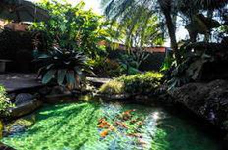 Lago com carpas exóticas chama a atenção na Agrícola da Ilha (Agencia RBS/Rodrigo Philipps)