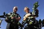 Wilibaldo aconselhou Afonso a cobrir com terra raízes das árvores do pormar do agricultor (Agencia RBS/Leo Munhoz)