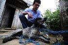 Animais estariam sendo envenenados com substância utilizada em plantações de batata (Agencia RBS/Ronaldo Bernardi)
