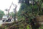 Estrutura dos postes próximos também foi danificada pela força da queda (RBS/Átila Froehlich)