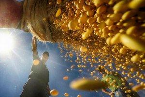 No auge, colheita deve se estender até fim de abril no Rio Grande do Sul (Agencia RBS/Tadeu Vilani)