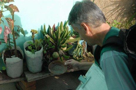 Agentes atuam no trabalho de delimitação, levantamento, eliminação e tratamento à dengue (Laís Mattioda/divulgação)