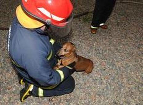 Cachorro da família foi o primeiro a alertar a vizinhança de que algo estava errado (Agencia RBS/Salmo Duarte)