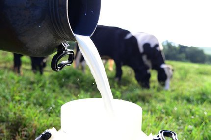 Produção diária de leite no Rio Grande do Sul é de cerca de 13 milhões de litros (Especial/Diogo Zanatta)