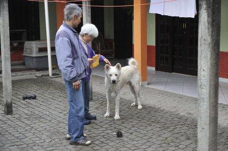 Kazuyuki e Emy Takemura enfrentam os difíceis desafios de conviver com o câncer e doar o cão Riki Maru (Agencia RBS/Leo Munhoz)