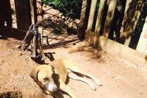 O cachorrinho Feio não se afasta do local onde o menino morreu (Diário Gaúcho/Eduardo Torres)