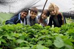Professora Francine dos Santos, Eduarda, Eliseu e Isabelly têm prazer em cultivar a horta do CEI Espinheiros (Agencia RBS/Salmo Duarte)