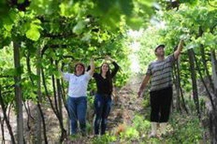 Márcia e Sandro Giacomelli, com a filha Alessandra, cultivam uva moscato em Farroupilha, a décima região gaúcha a conquistar selo de indicação geográfica (Agencia RBS/Jonas Ramos)
