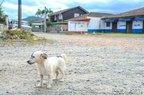 Bobby, cachorro comunitário da vizinhança, passou pelo portão e ficou com a vítima e o filho dela até a chegada da Polícia (Agencia RBS/Rodrigo Philipps)