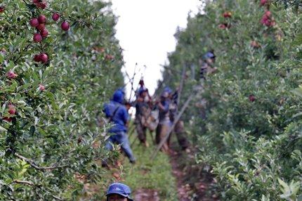 Geração de vagas está associada às culturas de verão, no período ocorre maior mobilização de mão de obra para a safra (Agencia RBS/Lauro Alves)