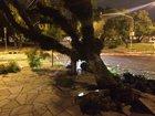 Vento derrubou árvores na Capital (Gaúcha/Mateus Ferraz)