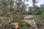 Queda de árvores com o temporal de 19/10/2017 na BR-287, entre Jaguari e Santiago, na região do Chapadão. (Arquivo Pessoal/Fabio Pinto)