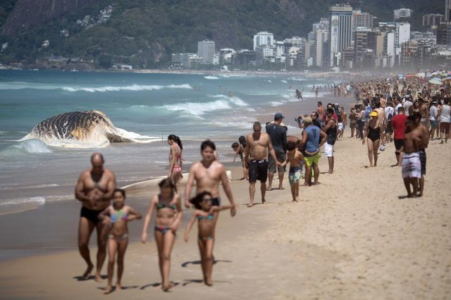 A wave hits a 12 meters whale that was found dead is at Ipanema beach in Rio de Janeiro, Brazil, on November 15, 2017.  / AFP PHOTO / Leo CorreaEditoria: ENVLocal: Rio de JaneiroIndexador: LEO CORREASecao: natureFonte: AFPFotógrafo: STR