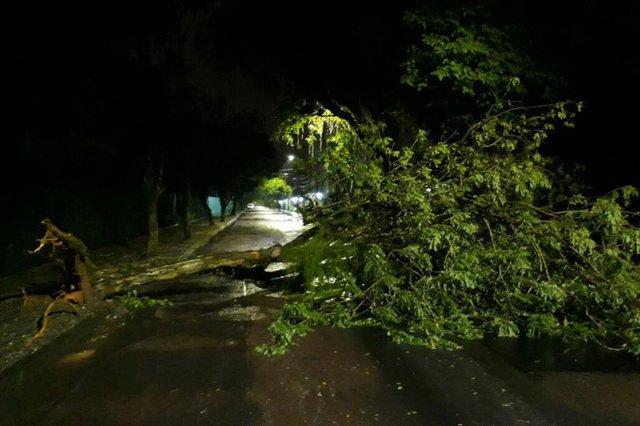 JOINVILLE, SANTA CATARINA, BRASIL (25/12/2017) - Chuva forte provoca queda de árvores em Joinville