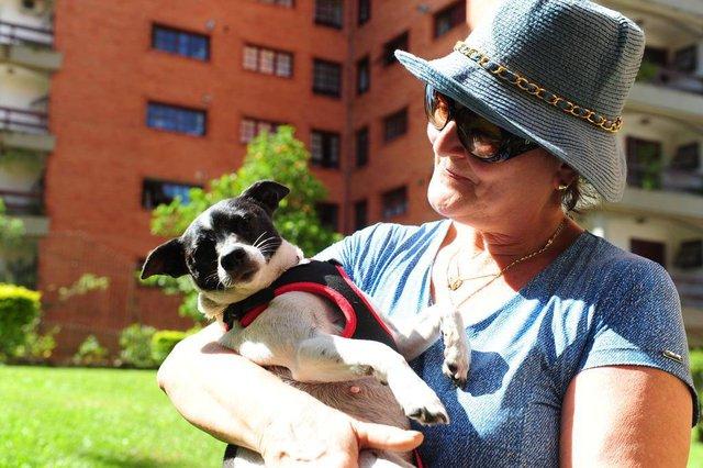 CAXIAS DO SUL, RS, BRASIL (27/12/2017). Nilva Bergozza colocou uma medalha com identificação (medalha no pescoço)  na  cachorra Shiva. OBS: Nilva pede para apagar o número do telefone na medalha. (Roni Rigon/Pioneiro).