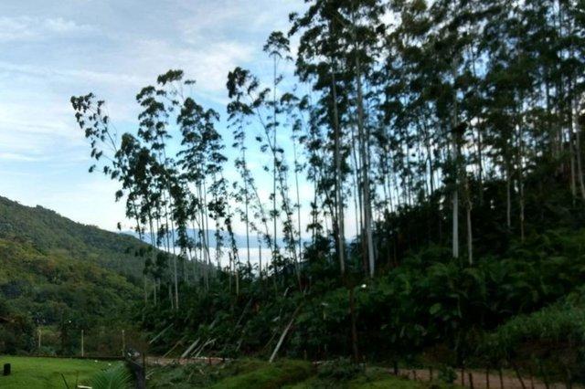 Quedas de árvores e ainda há muitas famílias sem energia elétrica.