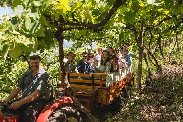 Tour Vinho e Paisagem, da Cristofoli - Vinhos de Famíla, em Faria Lemos, distrito de Bento Gonçalves.