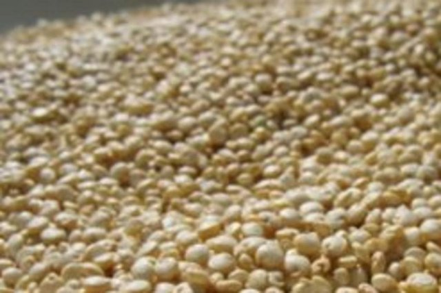 Quinoa, cereal típico do Equador