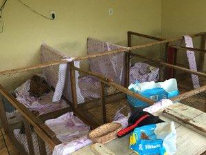 Eles estavam em situação de maus-tratos em canil de Jaraguá do Sul, apontam veterinários que estiveram no local (NSC TV/Marco Antonio Mendes / NSC TV)