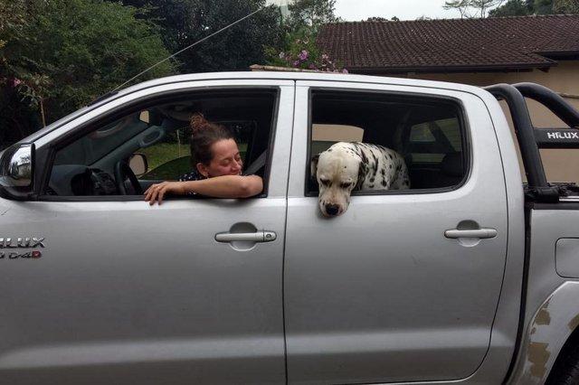 Cão é resgatado de tubulação na Velha, em Blumenau