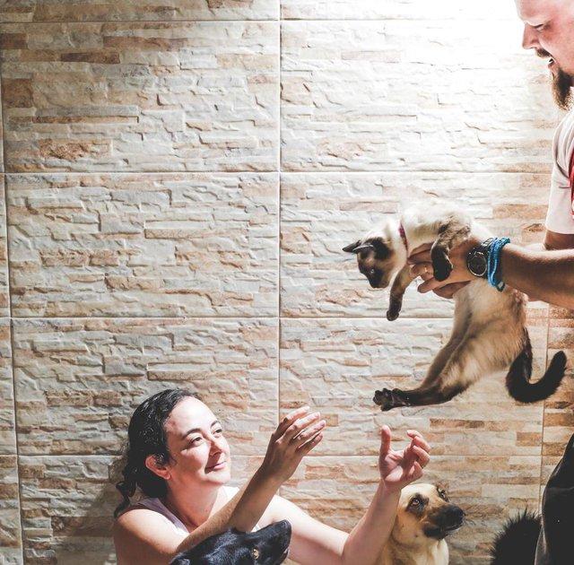 PALHOÇA, SC, BRASIL, 15.11.2018: Juliana Alexandre Rocha e Jackson May cuidam de oito cachorros e uma gata (que se chama Gato). (Foto: Diorgenes Pandini/Diario Catarinense)Indexador: Diorgenes Pandini