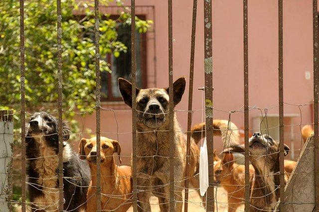 CAXIAS DO SUL, RS, BRASIL, 28/12/2018Senhora que acolhe animais em Ana Rech na rua primo gastaldelo, 204.Ela está doente e os animais precisam ser adotados. (Lucas Amorelli/Agência RBS)