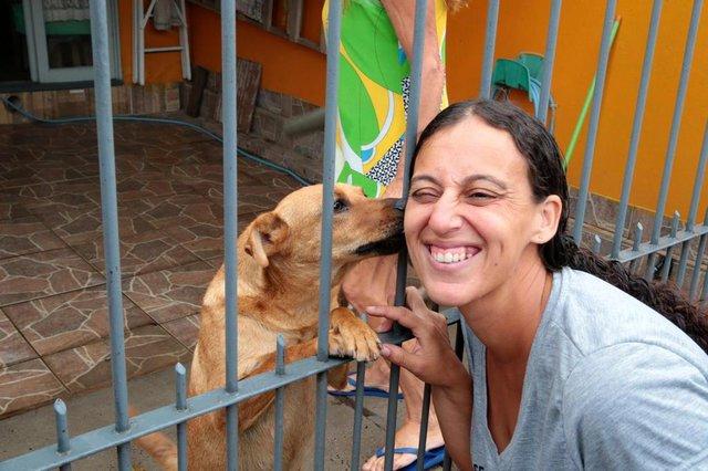 ALVORADA-RS- BRASIL- 15/02/2019- Priscila Alves Silva, recolhe material reciclável para ajudar animais de rua. Priscila com a cadela Bibica, que fez uma cirurgia com recursos de reciclagem.   FOTO FERNANDO GOMES/ DIÁRIO GAÚCHO.