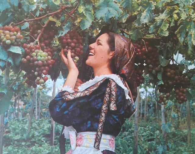 Calendário Antoniano de 1972, impresso pela Editora São Miguel. Fotos do Studio Geremia. Na foto, colheita da uva e vindima, na Granja União, em Flores da Cunha. Moça não identificada.