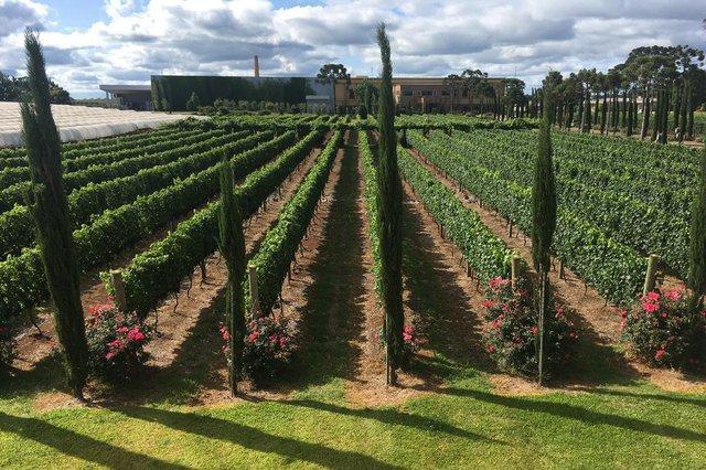 Vinícola Campestre ocupa uma área de 83hectares em sua sede de Vacaria, onde produzirá apenas vinhos finos. Desde fevereiro, a vinícola está com visitações abertas e vai investir ainda mais em enoturismo.Na foto: o proprietário João Carlos Zanotto.<!-- NICAID(14419379) -->