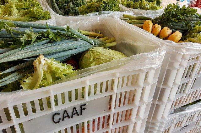 Cooperativa de Agricultores e Agroindústrias Familiares de Caxias do Sul (CAAF), idealizou em parceria com o Sebrae uma forma de comercialização de hortifrúti por telefone.<!-- NICAID(14465056) -->