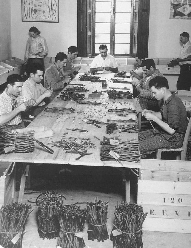 Funcionários da Estação Experimental de Viticultura e Enologia no preparo dos enxertos para videiras, na década de 1930.<!-- NICAID(14486621) -->