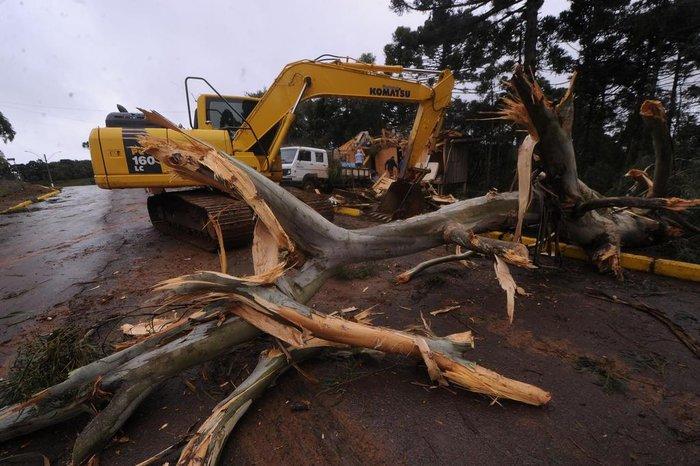 Árvore contorcida que caiu sobre uma casa