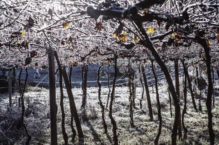 Em Caxias do Sul, na Serra, a terça-feira (20) amanheceu com geada