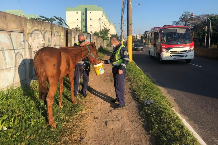 Animais receberam alimento de agentes da EPTC