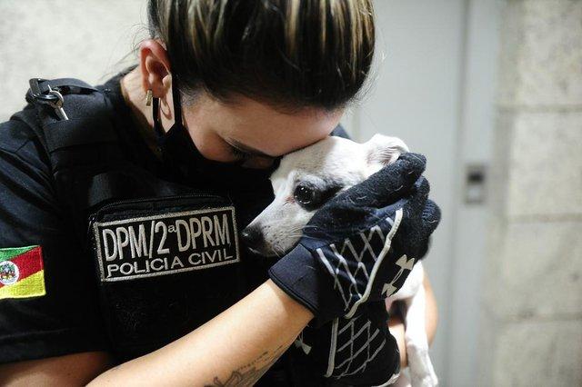 ESTEIO,RS,BRASIL.2021,04,19.Operação Arca,resgata cãozinho da raça Pinscher de oito anos de idade, foi resgado pela Policía Civil,onde seu proprietario o dopava com maconha.(RONALDO BERNARDI/AGENCIA RBS).<!-- NICAID(14761086) -->