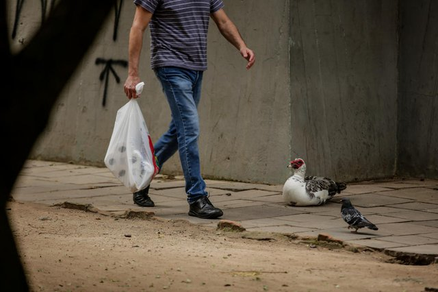 PORTO ALEGRE, RS, BRASIL,  02/09/2021-  Animais serão retirados para passarem por testes laboratoriais devido a risco de doenças Foto:  Marco Favero / Agencia RBS<!-- NICAID(14879520) -->
