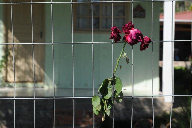 BOM PRINCIPIO, RS, BRASIL (06/04/2021)Vizinhos da menina Jordana Tamires Christ Watthier, 13 anos, ainda procuram entender o que aconteceu para que a garota fosse morta de forma tão brutal. Jordana foi morta no domingo e encontrada em um matagal nas proximidades da rs 122, em Bom Princípio, no domingo de Páscoa. (Antonio Valiente/Agência RBS)<!-- NICAID(14751302) -->