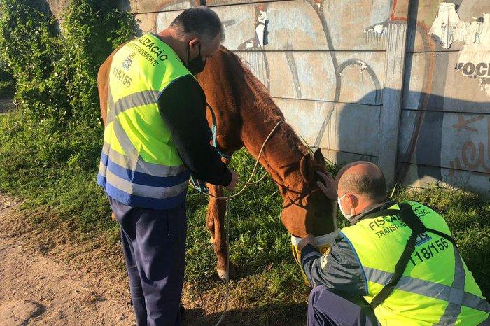 Motoristas relataram a presença dos animais por volta das 6h30min