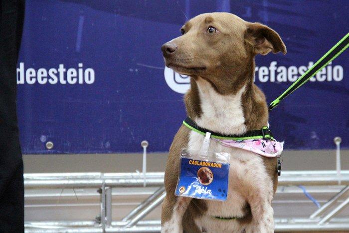 Os animais receberam certificados e crachás