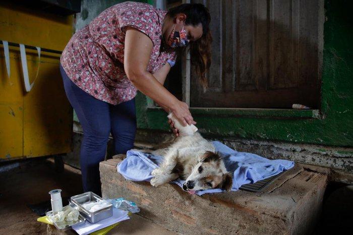 A cadela Mariazinha foi atropelada e recebeu cuidados em casa