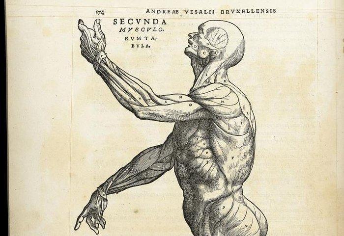 Conheça o trabalho de Andreas Vesalius, o pai da anatomia moderna ...