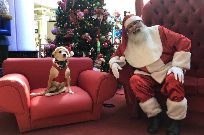 4f3e7292d Cãozinho paraplégico estreia fotos de pets com Papai Noel em ...