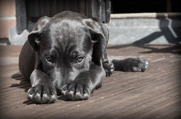 928c550e3b6 Os cinco problemas mais comuns na pele de seu cão