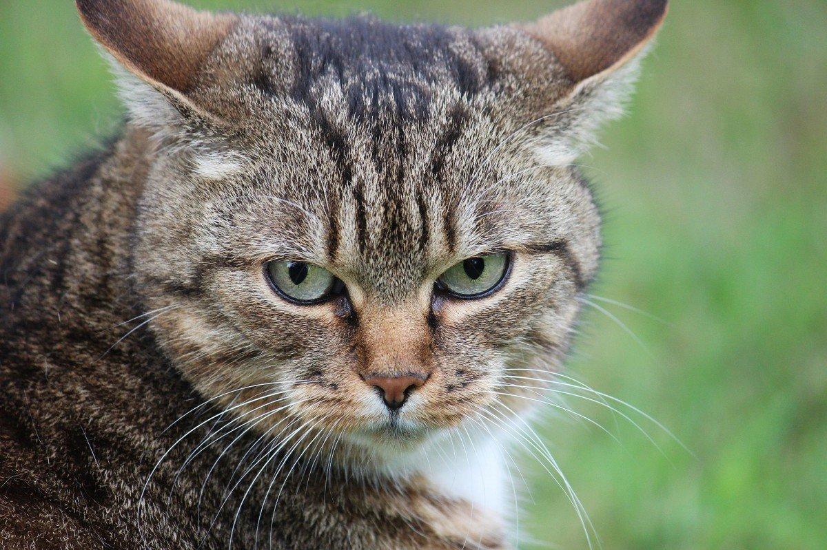 fezes com sangue em gatos