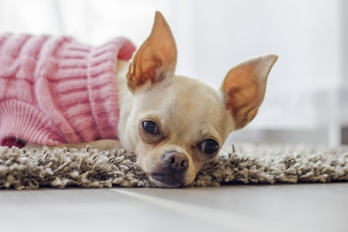 Resultado de imagem para Saiba quais cuidados ter com seu pet durante o inverno