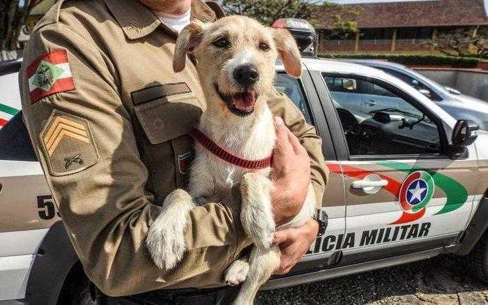Divulgação / Polícia Militar
