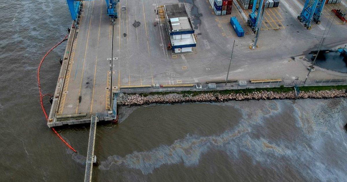 Aves são avistadas com manchas de óleo após vazamento em Rio Grande - Zero Hora