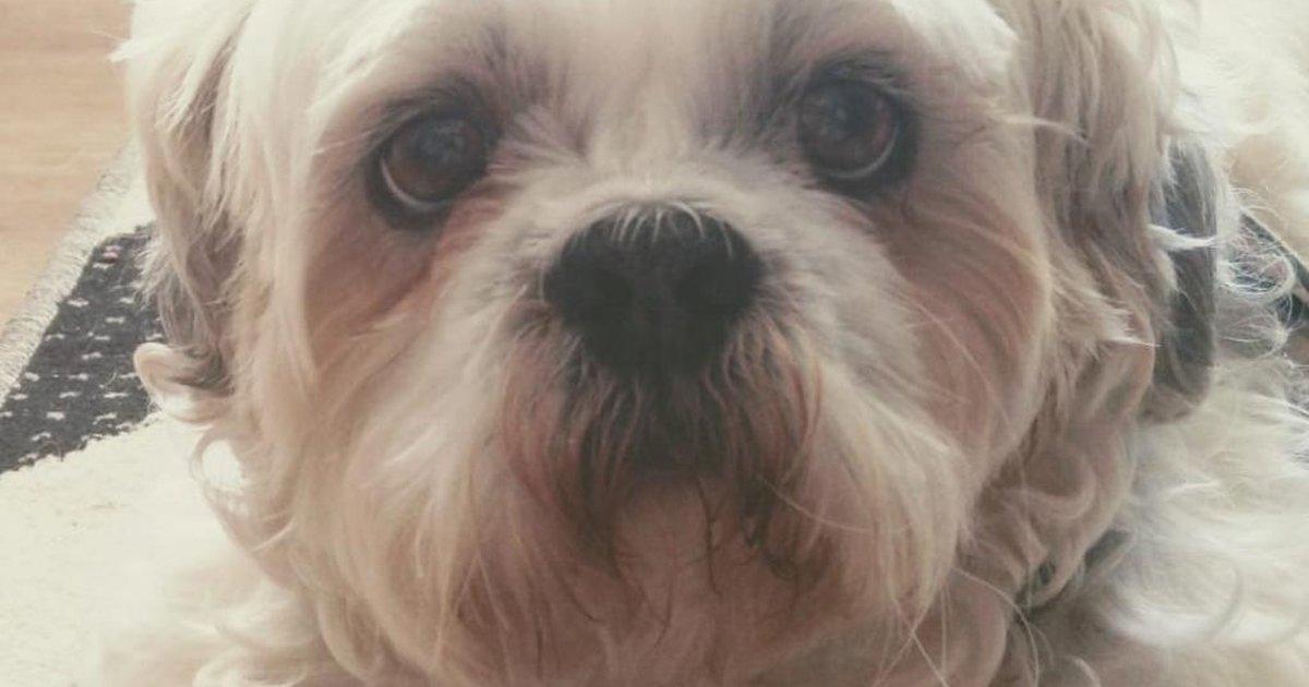 Cachorro ingressa na Justiça pedindo indenização a pet shop por danos físicos e psicológicos